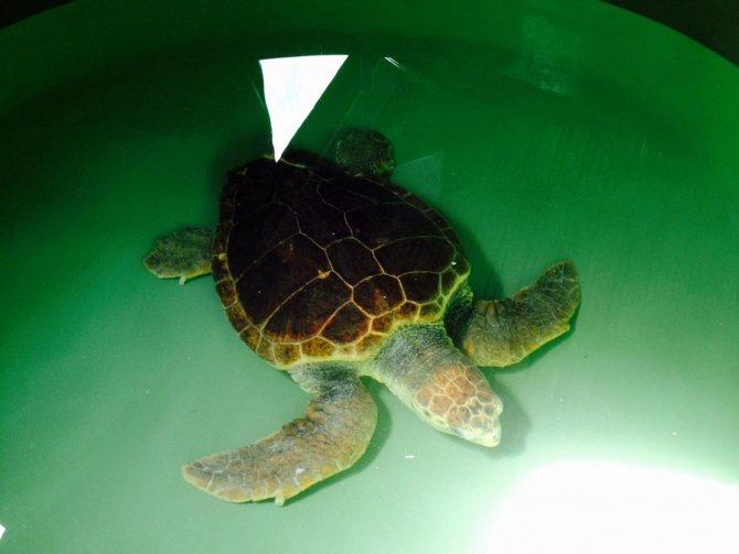 mersin-buyuksehir-belediyesi-35_-uluslararasi-deniz-kaplumbagalari-sempozyumuna-katildi-(1).jpg